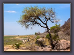 Landschaft am Lake Manyara