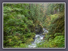 Sol Duc Fall Trail