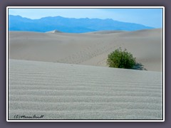 Death Valley - Mesquite Flat Sanddunes